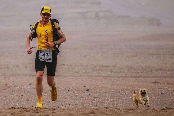 Бродячая собака поучаствовала в марафоне
