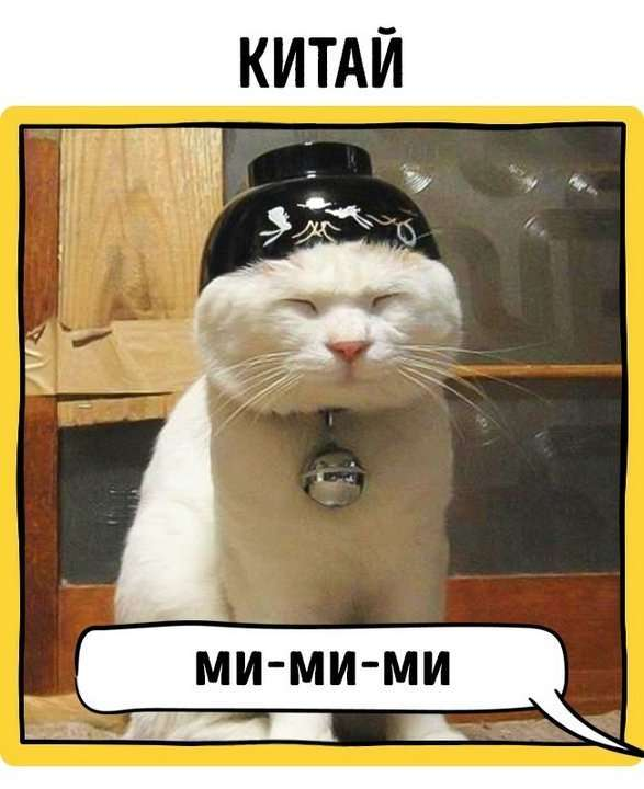Это занимательно: как в разных странах подзывают кошек