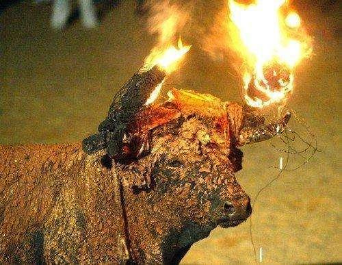 Адский бык (6 фото)