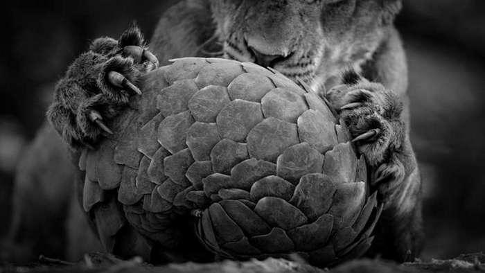 Финалисты конкурса на звание лучшего фотографа дикой природы 2016