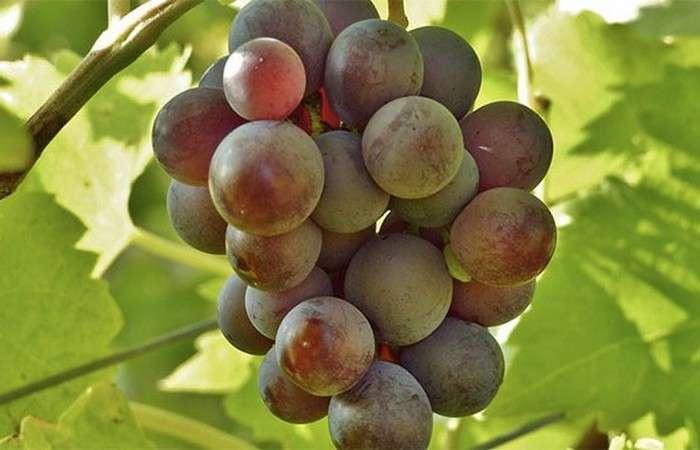 25 малоизвестных фактов о фруктах со всего мира