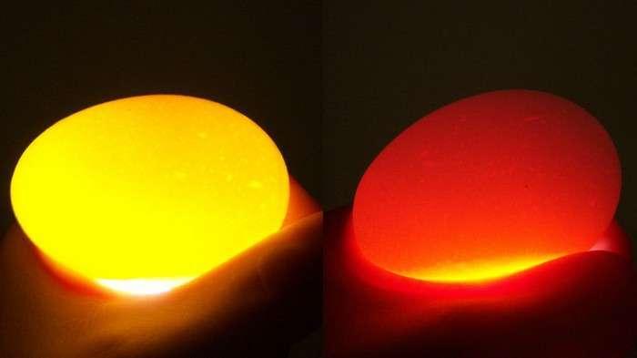 «Золотые» яйца или как сделать яичницу, не разбив яиц