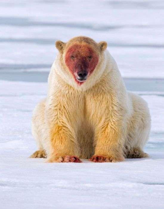 белый медведь сайт знакомств