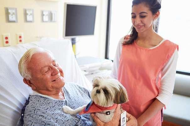 Эта больница позволяет больным людям видеться со своими питомцами, чтобы они чувствовали себя лучше (9 фото)