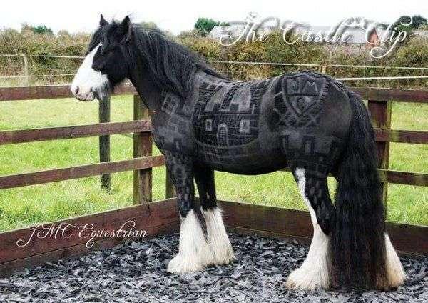 Фигурные стрижки лошадей от британской художницы (9 фото)