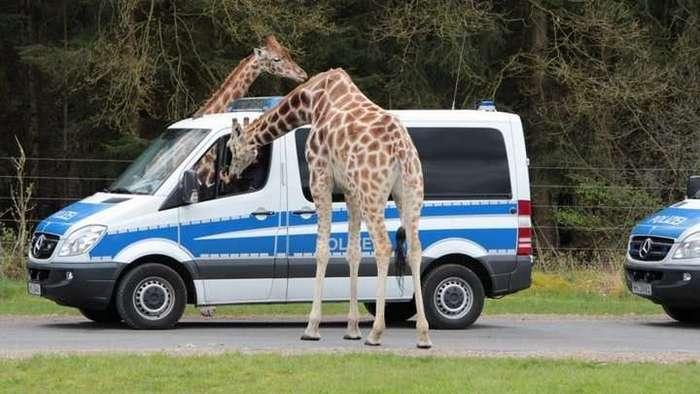 Забавные встречи с животным миром