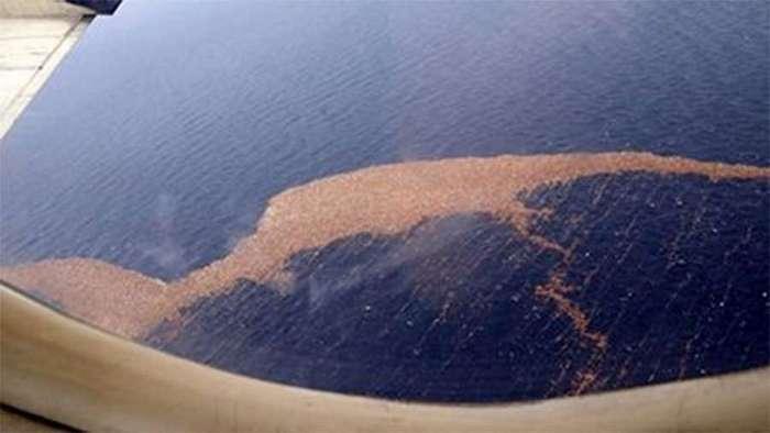 Фукусима отравила весь Тихий океан