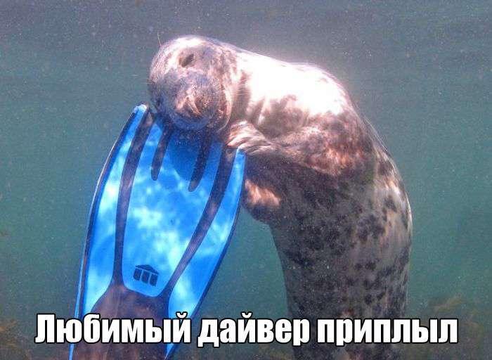 Подборка прикольных фото №1409 (118 фото)