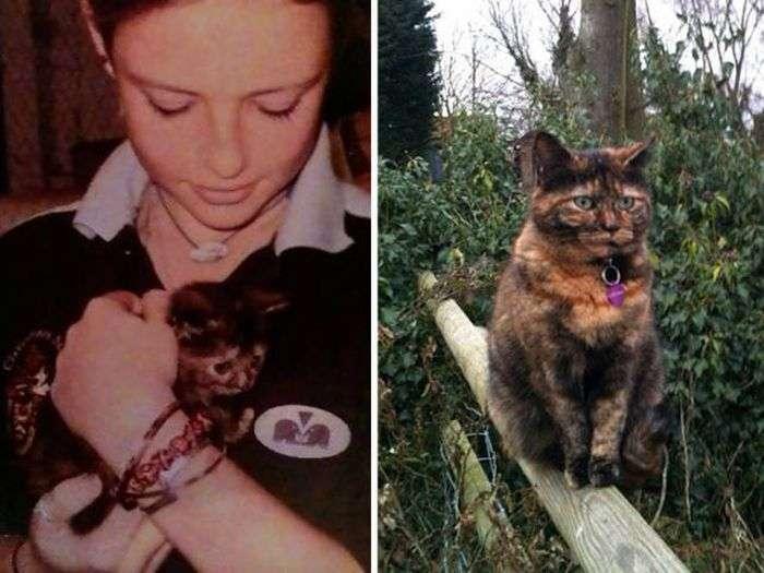 Первый и последний снимок домашних животных (35 фото)