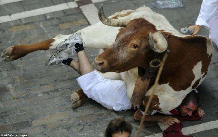 Жертвы быков (10 фото)