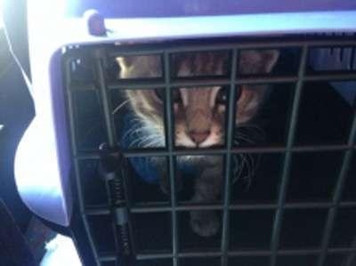 Судебные приставы арестовали кота