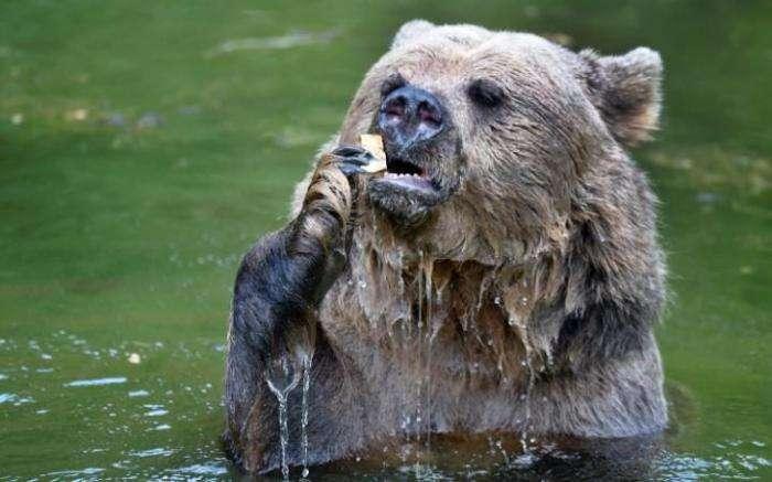 Лучшие фотографии животных прошлой недели (20 фото)