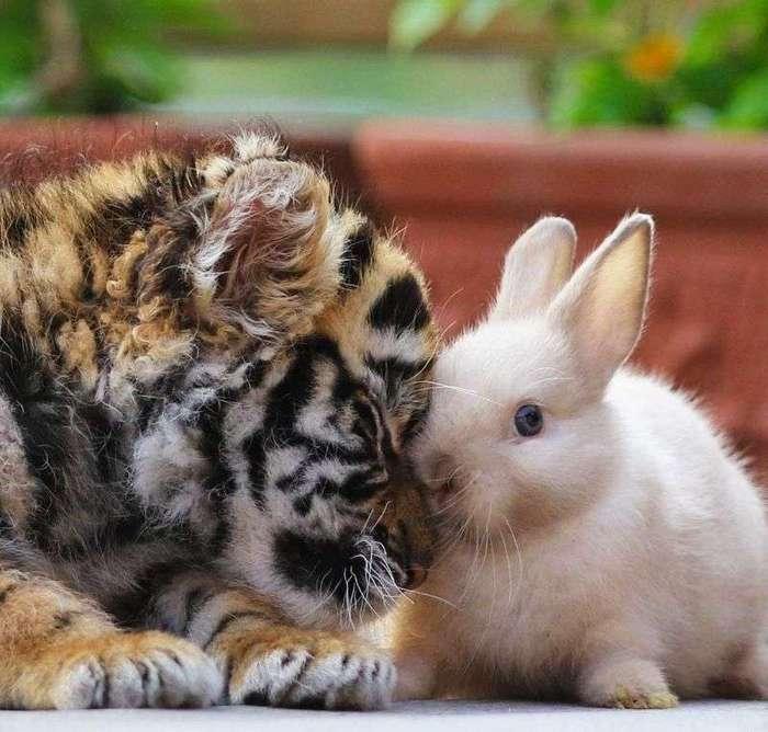 Неразлучные друзья - тигренок и львенок - из японского сафари-парка