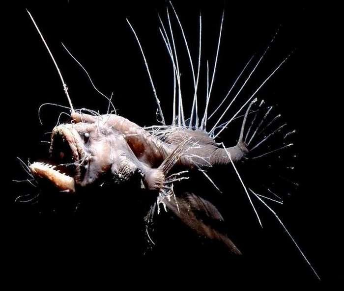 Самые причудливые рыбы