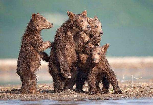Интересные факты о медведях (7 фото)