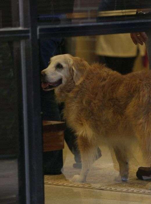 В США простились с последней собакой, искавшей жертв теракта 11 сентября 2001 года