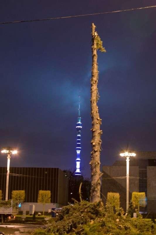 Как в Москве уничтожали ночью аллею голубых елей на ВДНХ