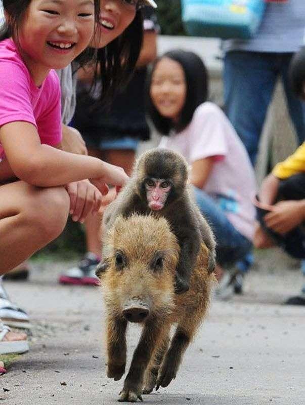 Забавные животные (22 фото)