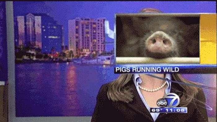 Забавные моменты в прямом эфире новостных выпусков