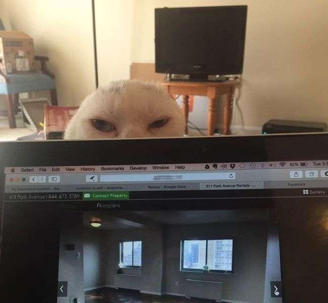 Безухий кот обрел любящую хозяйку (9 фото)
