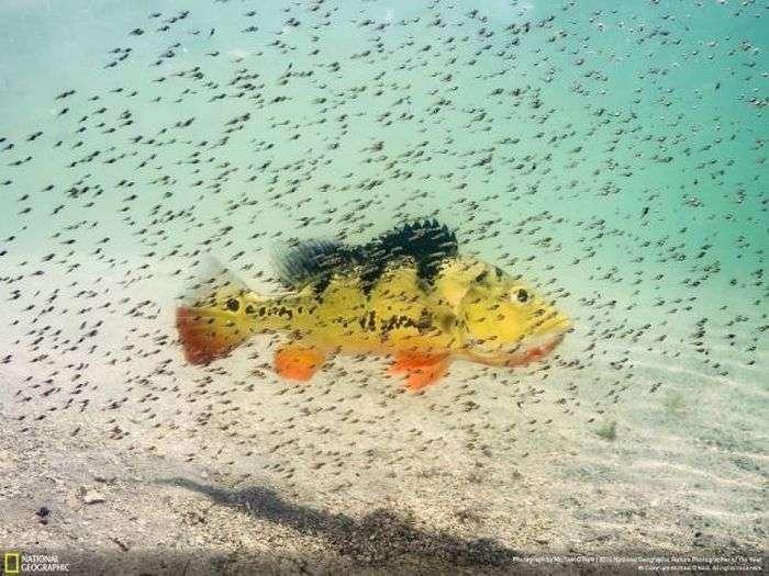 Лучшие работы фотоконкурса National Geographic 2016 (49 фото)
