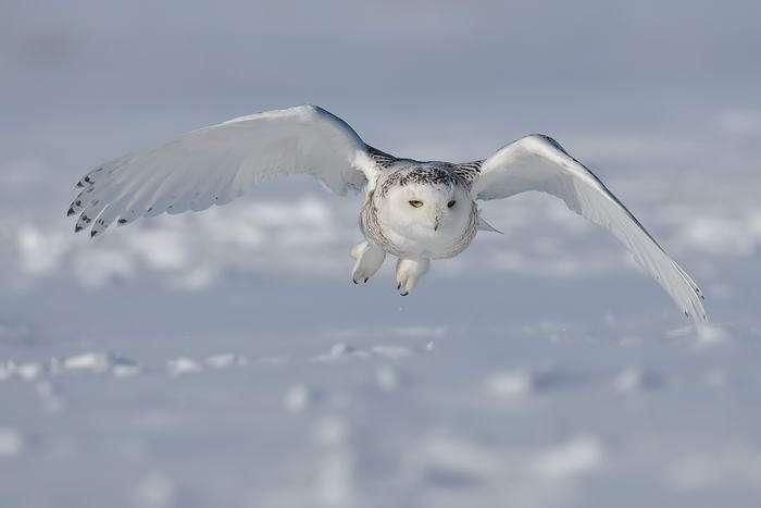 10 самых опасных птиц