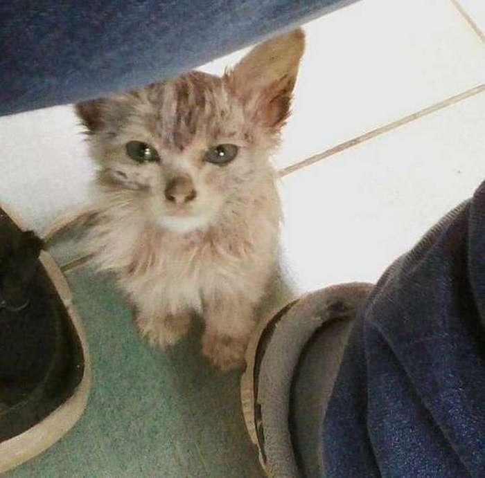 Спасение кошачьей крохи