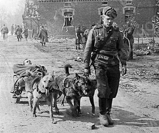 Животные - герои Великой Отечественной Войны
