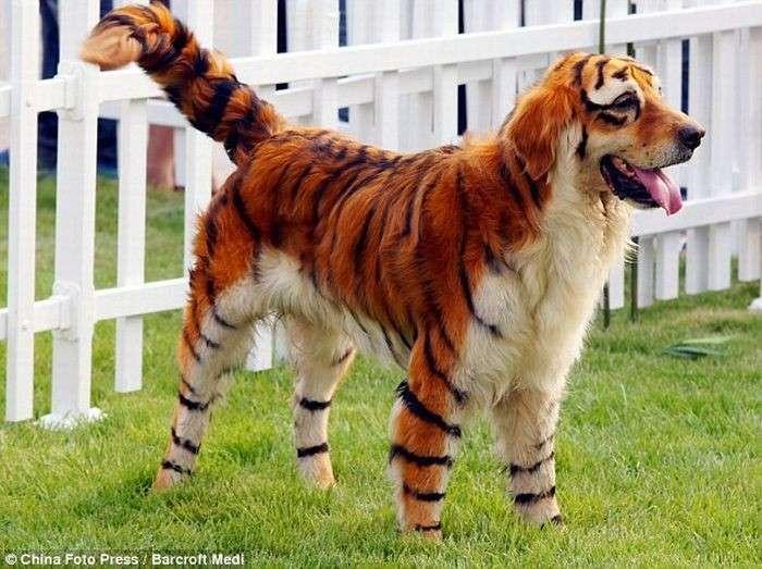 Тюнинг собак (10 фото)