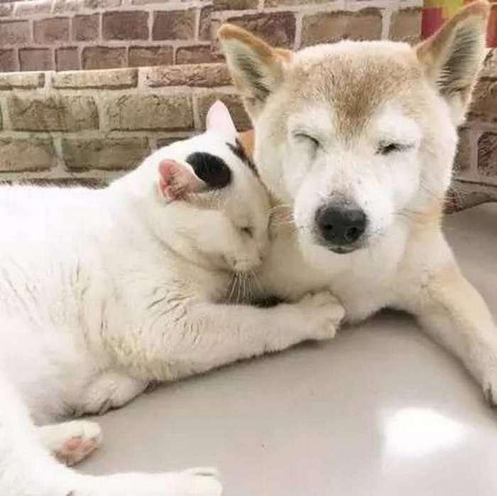 Старый пёс и друг его кот