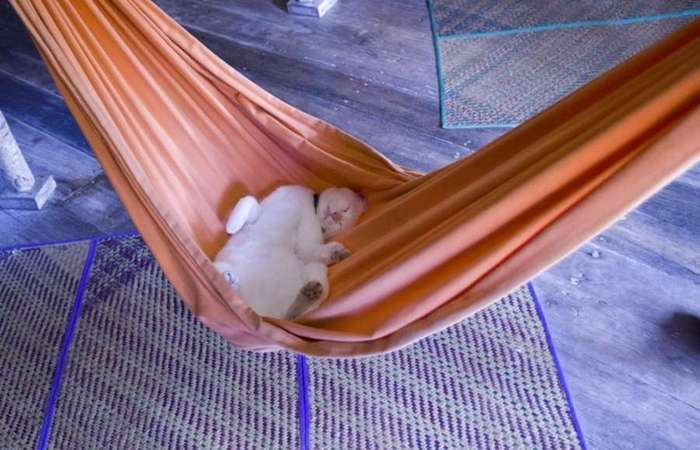 Изобретательные коты, которые спят изо всех сил