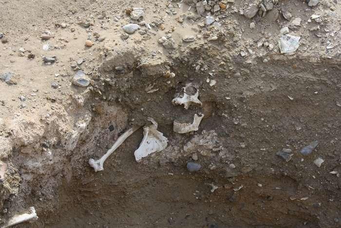 Жизнь юных расхитителей гробниц Египта