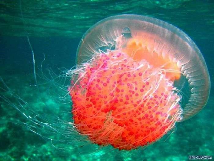 В Китае закрыли масштабное производство поддельных медуз