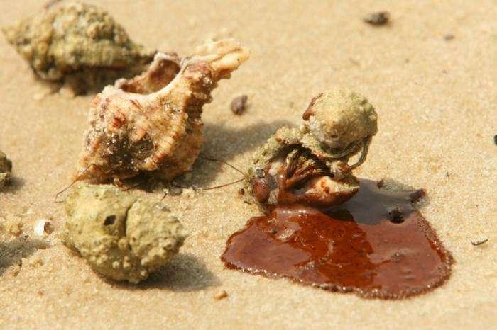 Страшные последствия разлива нефти (20 фото)