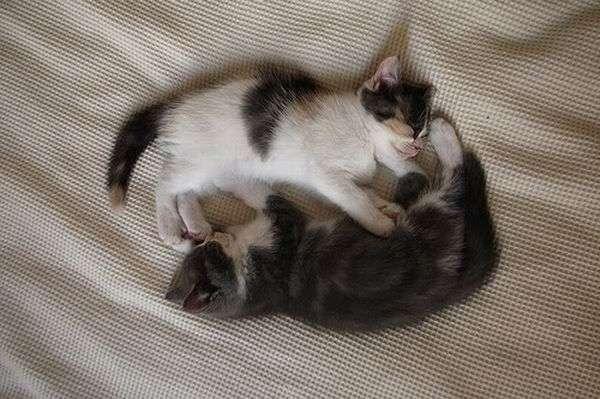Котята - брат и сестра (18 фото)