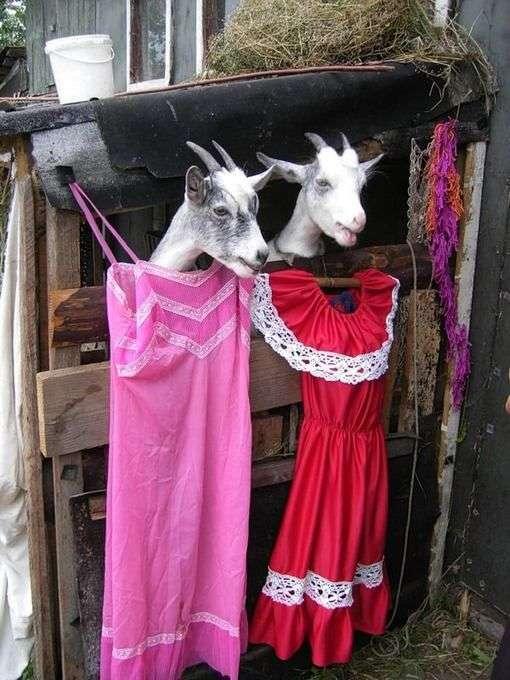 Парочки животных (27 фото)