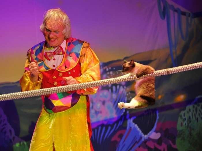 Кошкотерапия: лучшие цирковые номера и эксклюзивная методика воспитания детей от Юрия Куклачева