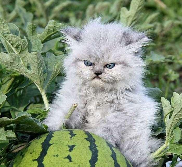 18 злобных и смешных животных, которые буквально переполнены гневом (18 фото)