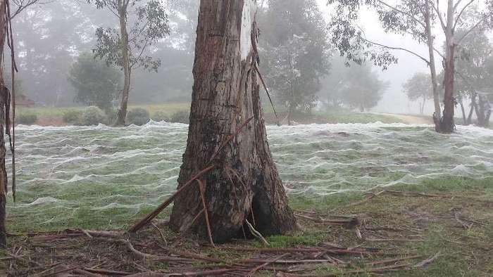 Зимой в Австралии белым-бело, но не от снега