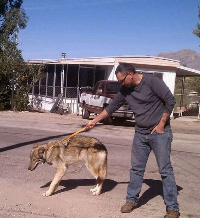 Взял щенка, а он и не собака вовсе…