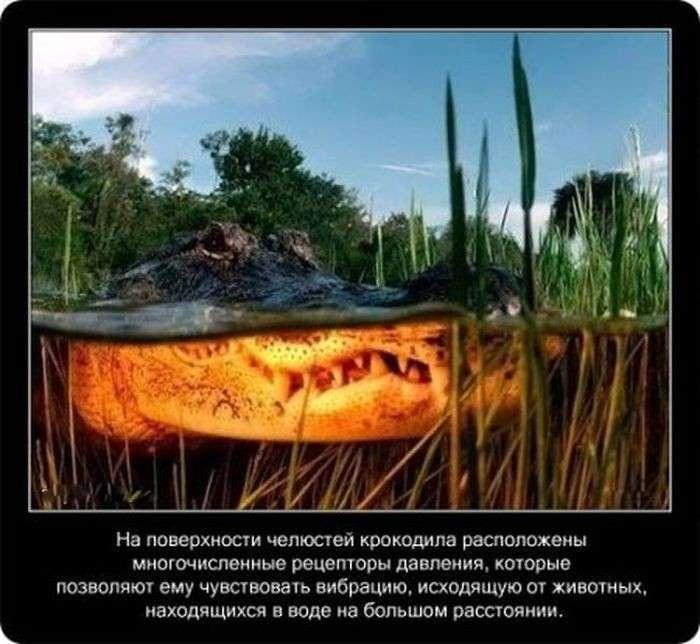 Завораживающие рептилии (22 фото)