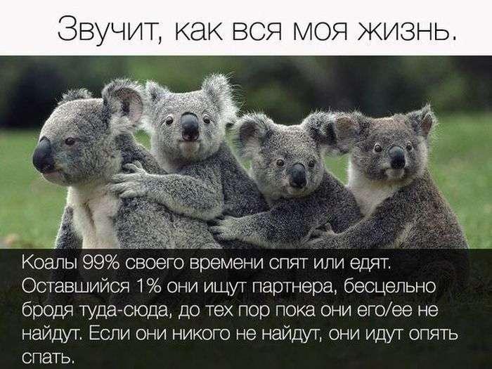 Подборка прикольных фото №1412 (119 фото)