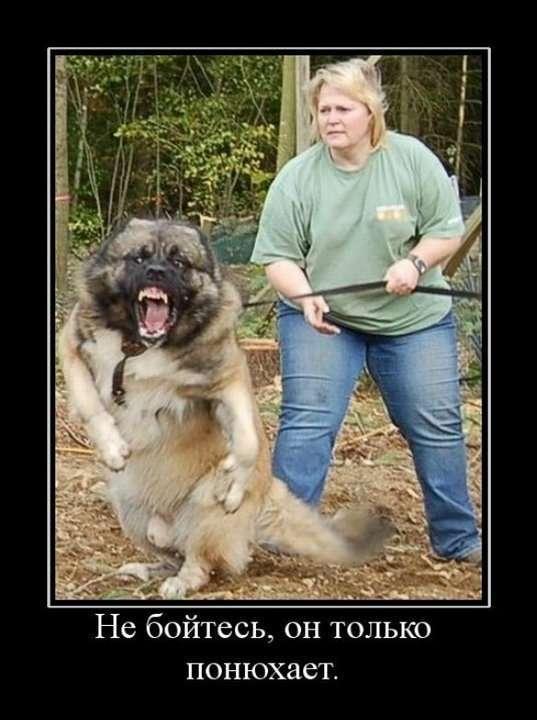 Лицензия на собаку: животное как оружие