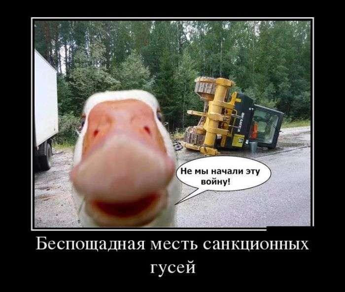 Демотиваторы №1322 (30 фото)