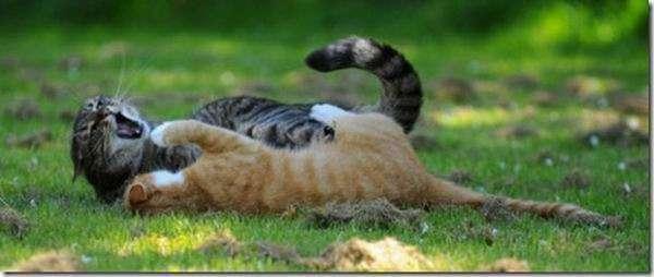 Кошачье кунг-фу (28 фото)