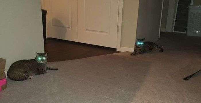 Коты, удивляющие своей синхронностью (34 фото)