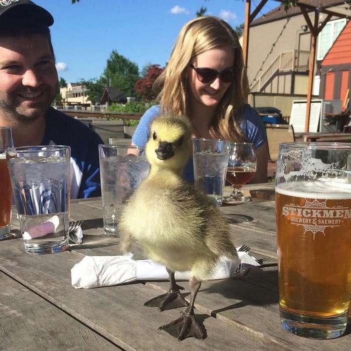 Американец вырастил и превратил в Инстаграм-знаменитость спасённого им дикого гусёнка