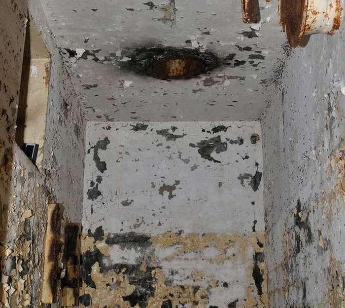 Удивительная муравьиная история: выживание в ядерном бункере без еды и королевы