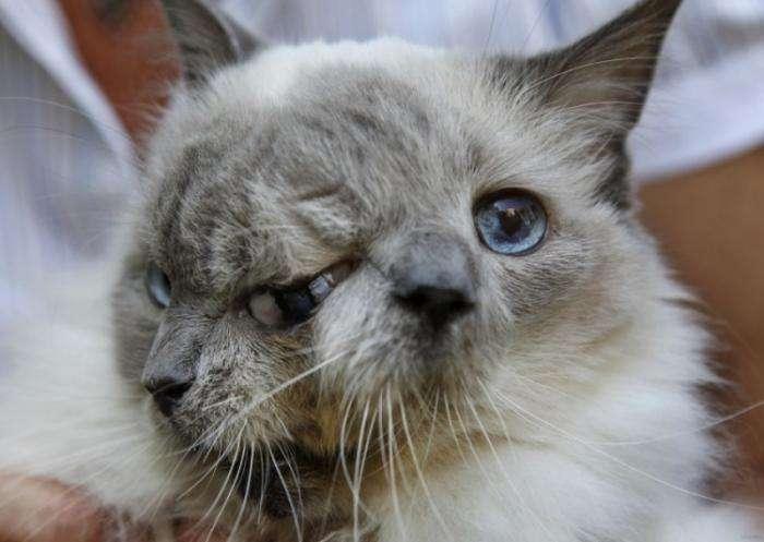 Кот с двумя лицами из Массачусетса (6 фото)