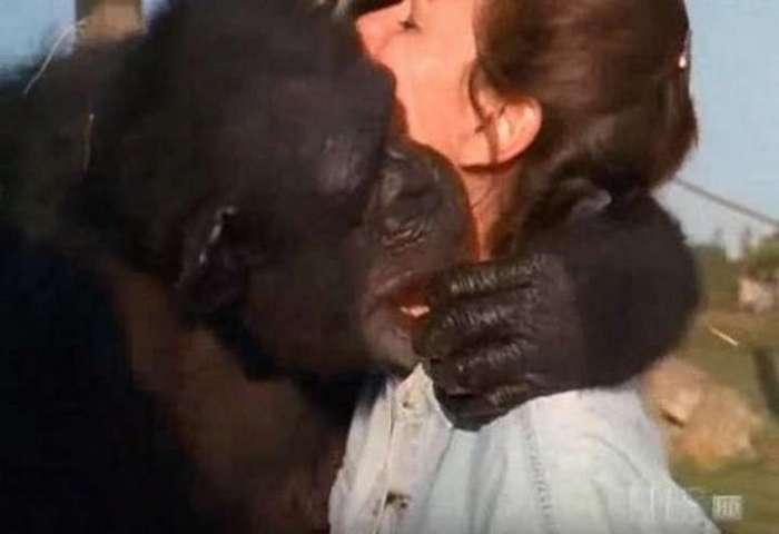 Обезьяны узнали свою спасительницу спустя 20 лет